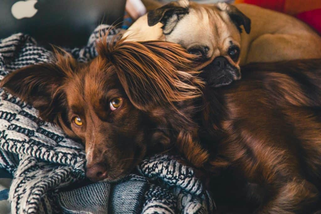Are Weighted Blankets Safe for Dogs?